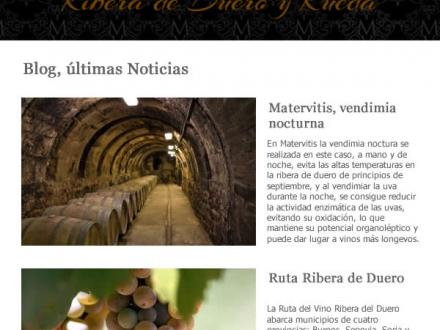 Diseño de newsletter para bodega